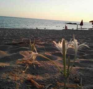 Пляж Салине ди Палинуро
